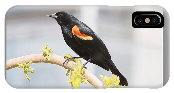 Red Wing Blackbird IPhone Case