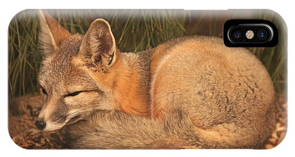 San Joaquin Kit Fox  IPhone Case