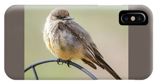 Say's Phoebe IPhone Case