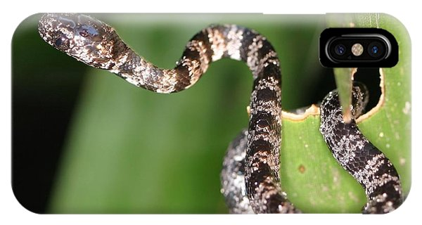 Snake iPhone Case - Snake by Mery Moon