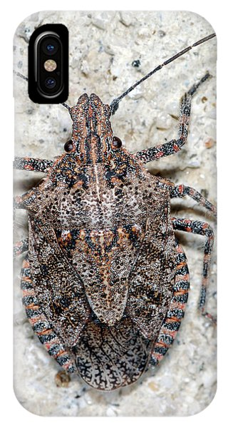 IPhone Case featuring the photograph Stink Bug by Breck Bartholomew