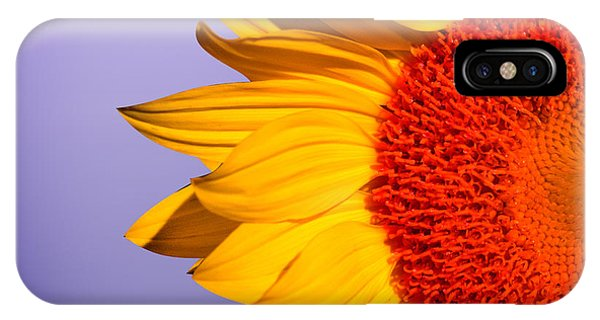 Floral iPhone Case - Sunflowers by Mark Ashkenazi