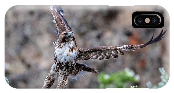 Red Tail Hawk iPhone Case - Take-off by Mike Dawson