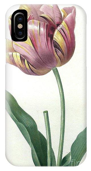 Cultivar iPhone Case - Tulip  by Pierre Joseph Redoute