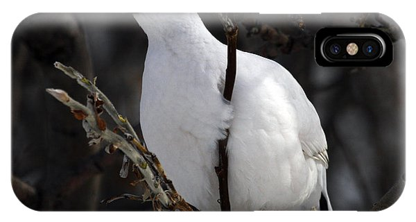 Willow Ptarmigan IPhone Case