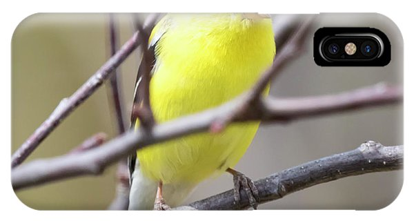 IPhone Case featuring the photograph American Goldfinch  by Ricky L Jones