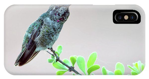 IPhone Case featuring the photograph Anna's Hummingbird by Tam Ryan