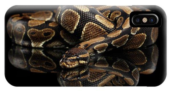 Ball Or Royal Python Snake On Isolated Black Background IPhone Case