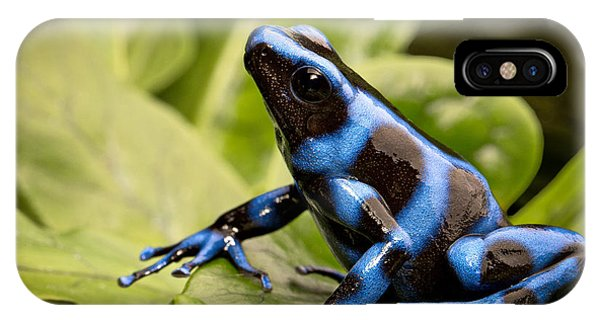 Blue Poison Dart Frog IPhone Case