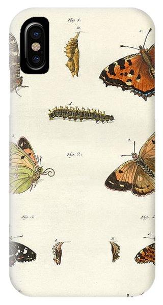 Chrysalis iPhone Case - Butterflies by German School
