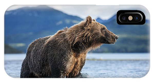 Blue iPhone Case - Coastal Brown Bear  Ursus Arctos by Paul Souders
