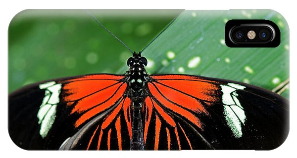 Doris Longwing Butterfly IPhone Case
