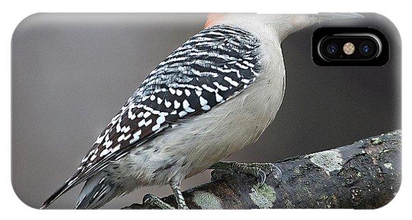 Female Red-bellied Woodpecker IPhone Case