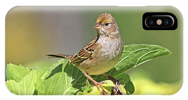 Golden -crowned Sparrow IPhone Case