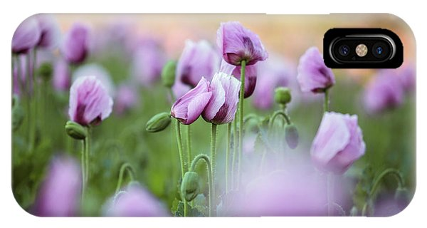 Blooming iPhone Case - Lilac Poppy Flowers by Nailia Schwarz