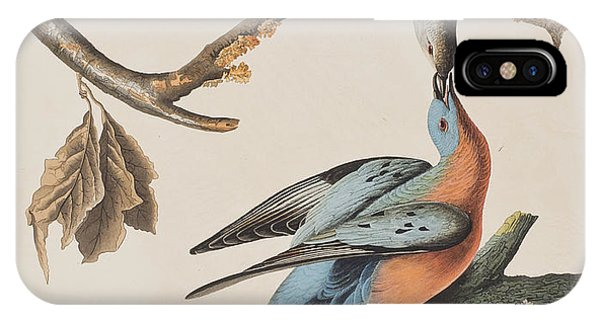 Passenger Pigeon IPhone Case