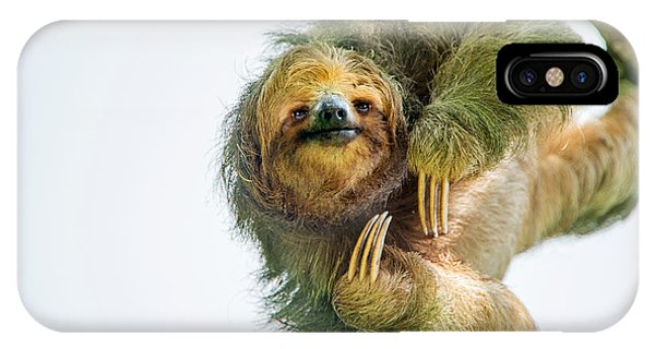 Three-toed Sloth Bradypus Tridactylus IPhone Case