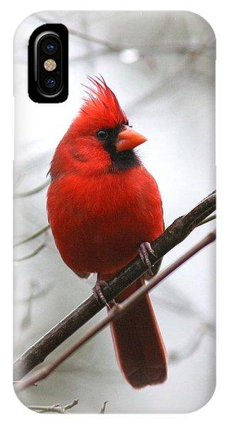 4772-001 - Northern Cardinal IPhone Case