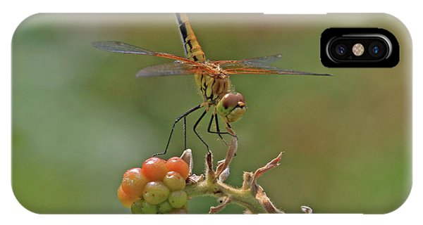 Band-winged Meadowhawk IPhone Case