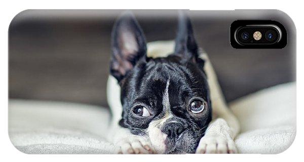 Pup iPhone Case - Boston Terrier Puppy by Nailia Schwarz
