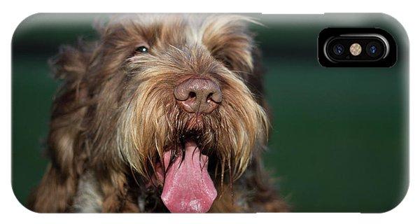 Brown Roan Italian Spinone Dog Head Shot IPhone Case
