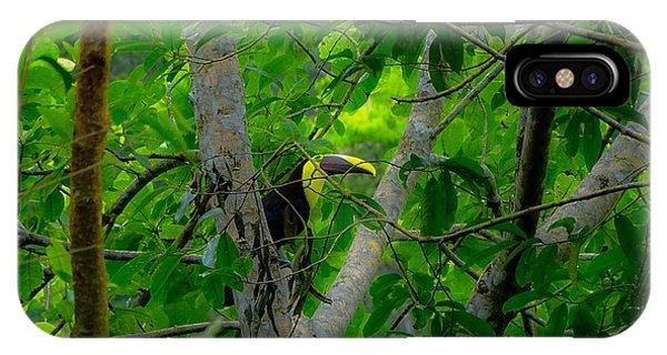 Chestnut-mandibled Toucan IPhone Case