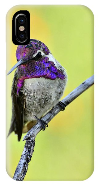 Costas Hummingbird  IPhone Case