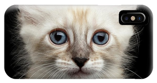 Kitten iPhone Case - Cute American Curl Kitten With Twisted Ears Isolated Black Background by Sergey Taran