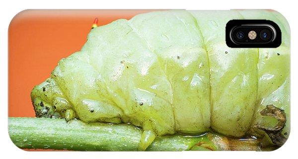 Large Green Caterpillar IPhone Case
