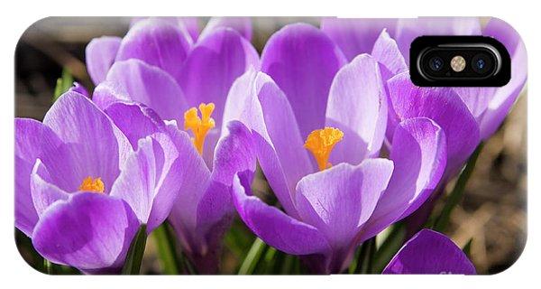 Purple Crocuses IPhone Case
