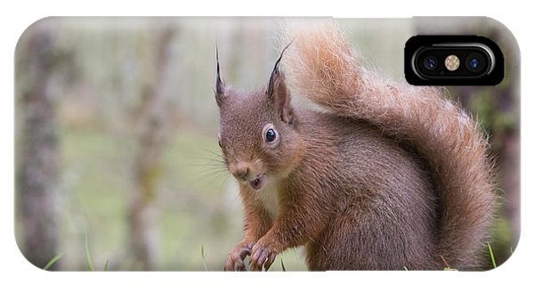 Red Squirrel - Scottish Highlands #8 IPhone Case