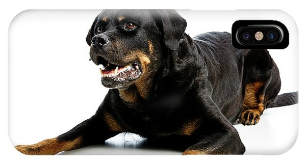 Rottweiler Dog IPhone Case