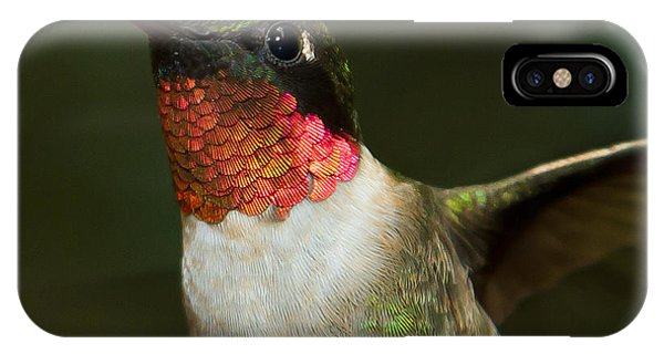 IPhone Case featuring the photograph Ruby-throated Hummingbird by Robert L Jackson