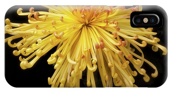 Chrysanthemum 'lava' IPhone Case
