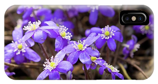 First Spring Flowers IPhone Case