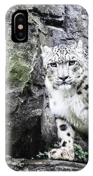 Snow Leopard iPhone Case - Snow Leopard by Martin Newman
