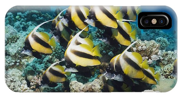 Red Sea Bannerfish Phone Case by Georgette Douwma