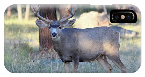 IPhone Case featuring the photograph 8x8 Mule Deer by Shane Bechler