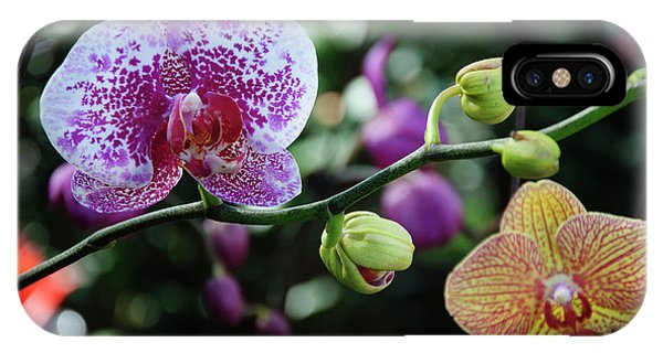 IPhone Case featuring the photograph Butterfly Orchid Flowers by Carl Ning