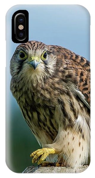 A Beautiful Young Kestrel Looking Behind You IPhone Case