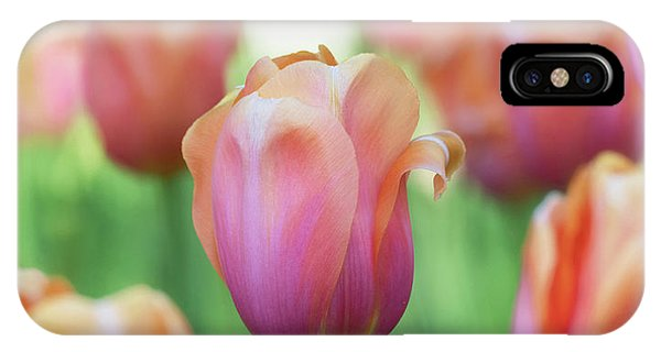 A Bed Of Tulips Is A Feast For The Eyes. IPhone Case