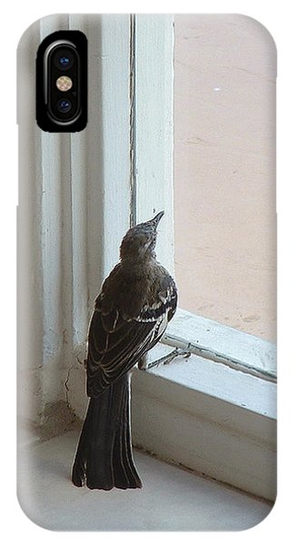 A Bird At A Plate Glass Window IPhone Case