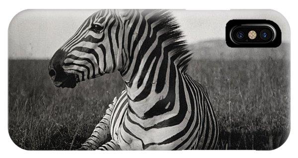 Zebra iPhone Case - A Burchells Zebra At Rest by Carl E. Akeley