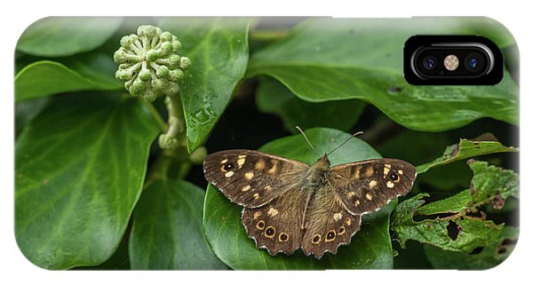 Wildlife Er iPhone Case - A Butterfly Sitting On An Ivy Leaf by Stefan Rotter