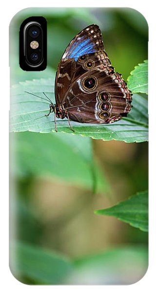 IPhone Case featuring the photograph A Butterfly Waiting by Raphael Lopez