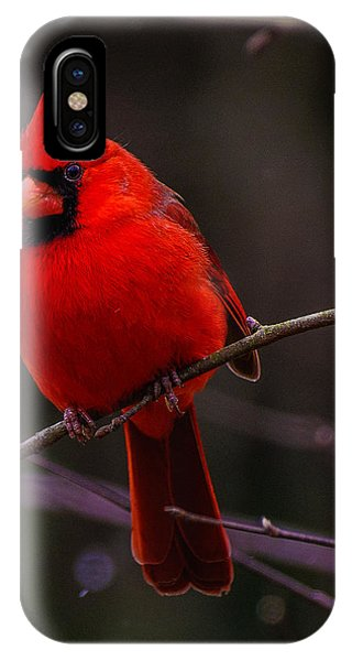 A Cardinal In January  IPhone Case