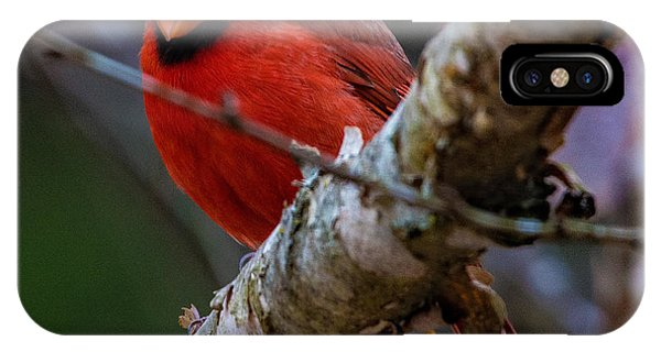 A Cardinal In Spring   IPhone Case