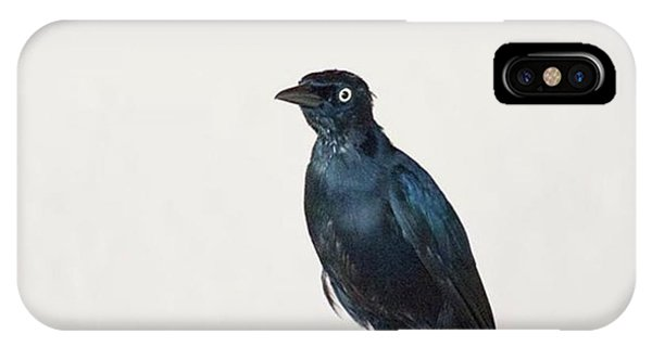 Animals iPhone Case - A Carib Grackle (quiscalus Lugubris) On by John Edwards
