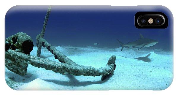 Sea Floor iPhone Case - A Caribbean Reef Shark Swims by Amanda Nicholls