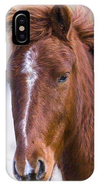A Chestnut Horse Portrait IPhone Case